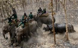 24h qua ảnh: Tê giác điên cuồng tấn công nhân viên bảo vệ động vật