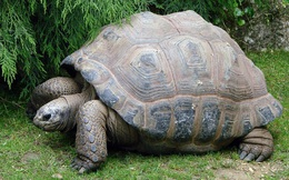 Con trai nằm mơ thấy đàn rùa đẩy quan tài, 3 ngày sau chân tướng sự việc được làm sáng tỏ