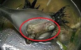 """Ăn canh cá mẹ nấu, cô gái trẻ thất kinh khi nhìn thấy """"vật thể lạ"""" có hình thù kỳ dị"""