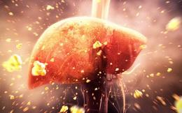 """9 nguyên nhân khiến gan """"chết mòn"""": Đều là những thói quen thường gặp hằng ngày"""