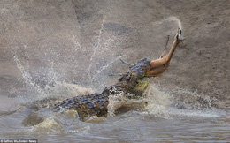 24h qua ảnh: Cá sấu khổng lồ xẻ thịt linh dương không thương tiếc