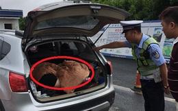 Chặn chiếc xe con lại để kiểm tra, cảnh sát phát hiện sự thật đáng kinh ngạc bên trong