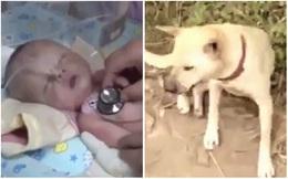 """Bị chôn sống, bé trai sơ sinh may mắn được chú chó """"anh hùng"""" cứu mạng"""