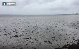 Giải mã thành công hiện tượng kỳ quái: Siêu bão Irma rút sạch nước biển