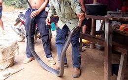 Con rắn khủng dài 3 mét mà nhóm công nhân bắt được đã đục thủng bao tải bò vào rừng