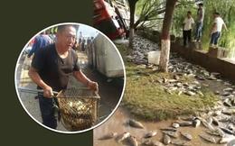 Xe chở cá bị lật, người dân hò nhau đi cướp