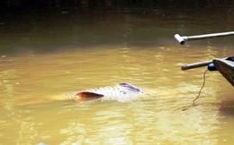 TP.HCM: Người dân nhảy xuống sông ôm cá dài gần 1m kéo vào bờ, bán 90 triệu