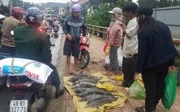 Cá tầm chết hàng loạt đem ra phố bán giá rẻ…, người mua vẫn chê