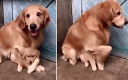Clip chó mẹ không cho người chủ đụng vào chó con vì một lý do cảm động!