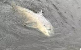 """Cá lớn cắn câu, người đàn ông mất 2 tiếng mới đưa được """"chiến lợi phẩm"""" lên khỏi mặt nước"""