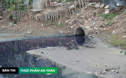 Rau sống ở Hà Nội tưới nước thải tím ngắt, nấm bằng ngón út đủ sức giết người