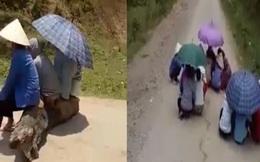 Người dân ngồi che ô chờ xe chở lợn đi qua để xin tiền