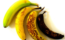 4 quả chuối dưới đây, bạn nên ăn quả nào nhất: Kết quả sẽ khiến nhiều người bất ngờ!