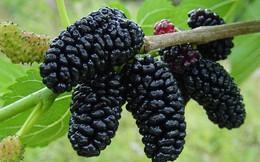 """Loại quả có nhiều ở Việt Nam được TS Mỹ mệnh danh là """"trái cây bảo vệ tim và gan"""""""