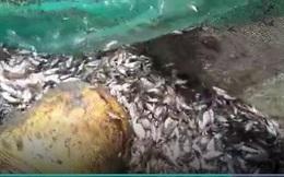 2 thanh niên bắt được cả nghìn con cá trong mương nước nhỏ