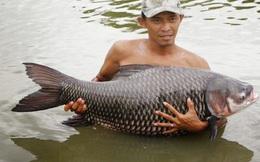 Vì sao loài cá hô quý hiếm bị đề nghị loại khỏi sách đỏ Việt Nam?
