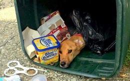 Chuyển đến sống cùng bạn trai, vứt bỏ chú chó vào thùng rác, người phụ nữ phải trả giá đắt
