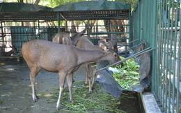 Vì sao vườn thú duy nhất ở Đà Nẵng có từ 30 năm qua bị đề nghị xóa sổ?