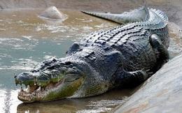 Đi câu, 2 người đàn ông bị mắc kẹt giữa bầy cá sấu và rắn độc suốt bốn ngày