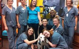 Chú chó bị bỏ rơi và 11 lần quay về trung tâm cứu hộ động vật vì  lý do xúc động
