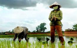 Mỗi người Việt chỉ làm được 85 triệu đồng/năm