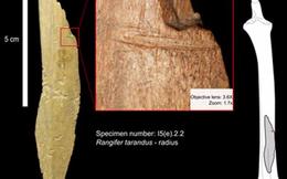 Lịch sử Bắc Mỹ có thể phải viết lại vì phát hiện khảo cổ 24.000 năm tuổi