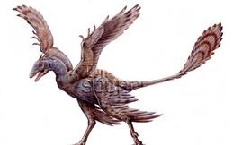Chỉ to bằng con quạ nhưng loài khủng long này lại có tới 4 cái cánh
