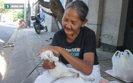 Bà lão 85 tuổi không chồng con nhặt ve chai lấy tiền nuôi đàn mèo 20 con ở Sài Gòn