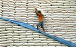 """Bộ Công Thương khẳng định: """"Xin giấy phép xuất khẩu gạo 20.000 USD là bịa đặt"""""""