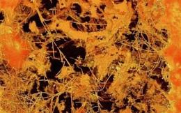 Phát hiện dạng sống cổ xưa nhất trên Trái Đất ở độ sâu 800m tại Nam Phi?