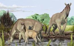 """Tìm thấy loài thú """"ẩn dật"""" trong kỷ băng hà khiến Charles Darwin bối rối giải mã"""