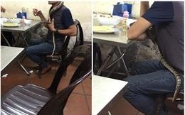 Người đàn ông mang rắn đi nhậu khiến khách hàng vừa sợ vừa tò mò