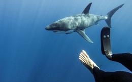 Đây là cách 1 người đối xử với loài cá mập sau khi bị chính chúng... cắn đứt chân