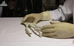 Nghi vấn bàn tay 3 ngón khổng lồ chỉ có thể là của người ngoài hành tinh