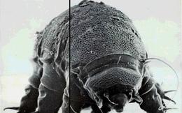 """Đây là sinh vật """"bất tử"""" duy nhất trên Trái đất, và cuối cùng khoa học đã tìm ra bí ẩn đằng sau chúng"""