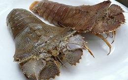 Cận cảnh loài tôm mũ ni ở Việt Nam có giá cả triệu đồng