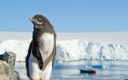 Không chỉ có băng tuyết và chim cánh cụt, Nam Cực đang nhiều thứ này đến mức quan sát được từ vũ trụ