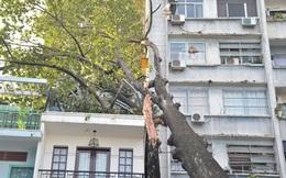 TP.HCM: Cây cổ thụ bật gốc, đè trúng ngôi nhà 3 tầng
