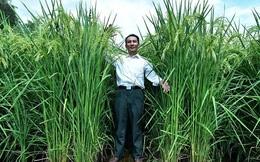 Trung Quốc tạo ra lúa cao 2 mét, mong đủ lương thực nuôi 1,3 tỉ dân