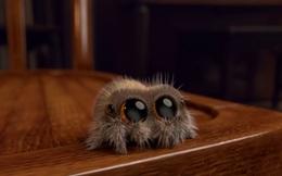 Chú nhện Lucas này sẽ là liều thuốc trị chứng sợ nhện cho bạn