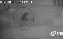 Con 1 tuổi thường xuyên khóc đêm, kiểm tra camera, mẹ bàng hoàng phát hiện bé thường xuyên bị bảo mẫu đánh đập