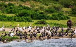 Đến Uganda khám phá động vật hoang dã hấp dẫn nhất thế giới