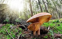 Nấm - loài duy nhất bảo vệ Trái đất trước rác thải rắn độc hại