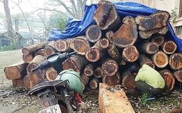 Rừng gỗ hương quý hiếm liên tục bị đốn hạ