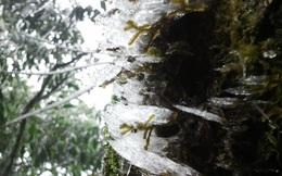 Dân mạng hào hứng với loạt ảnh mùa đông về sớm tại Sapa, Fansipan xuất hiện băng giá