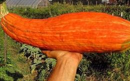 Hạt giống được chôn cất nghìn năm vẫn nảy mầm, khi thu hoạch điều bất ngờ đã xảy ra