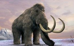 Tỷ phú Paypal tự chi tiền túi để thực hiện ý tưởng điên rồ với voi Mamut!