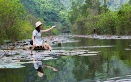 Không cần đi đâu xa, ngay ở Hà Nội cũng có một chốn ngập hoa súng, cảnh đẹp như phim cổ trang