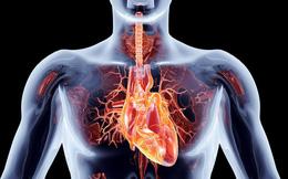 Hàng ngày bạn vẫn tiếp xúc với tác nhân gây bệnh tim này mà không hề hay biết