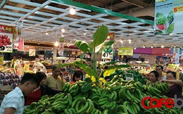 Chuối Đồng Nai dư thừa phải làm thức ăn cho bò, Big C tuyên bố thu mua 100 tấn giúp nông dân